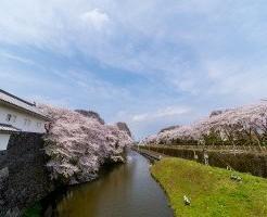 桜 霞城公園