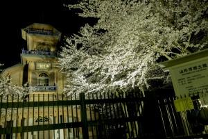 霞城公園 ライトアップ