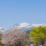 月山は桜が満開
